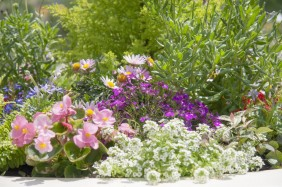 鮮やかな色のお庭